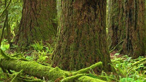 Safeguarding public confidence in B.C.'s forest management