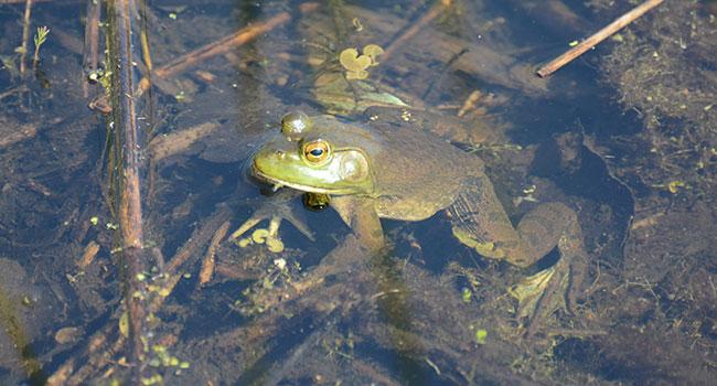 Do reptiles and amphibians actually hibernate during winter?