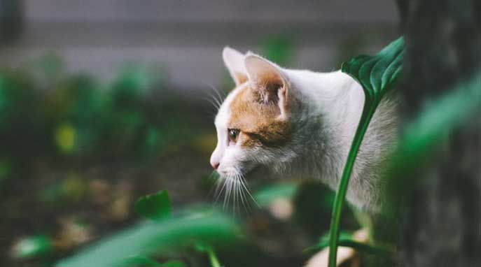 Is your cat outside killing wildlife right now?